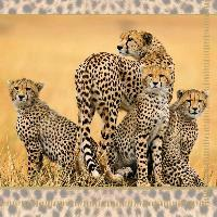 Servetel decorativ 'Cheetah family', 33cm